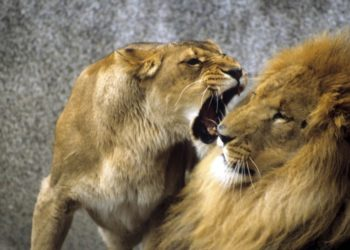 Are you being aggressive. 12 signs of aggression you need to recognise 1020x510 1